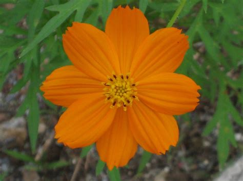 pretty orange pretty orange flower from costa rica from my lens