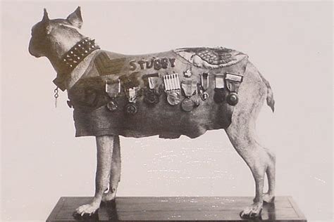 Sergeant Stubby Most Decorated The Most Decorated Earth In Transition