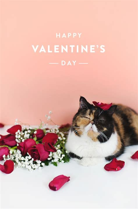 happy valentines day cat 17 best images about pudge the cat on cats