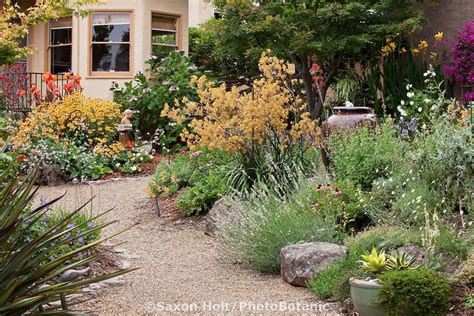 california backyard 188 best images about gardening no mow landscaping on
