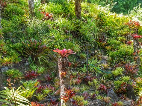 edens garden bromeliads eden garden auckland new zealand travel to eat