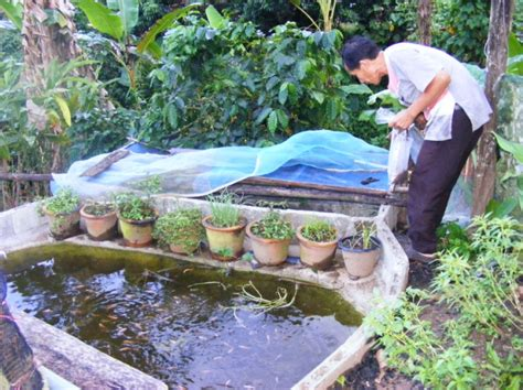home aquaculture backyard fish farming the gallery for gt home fish farming