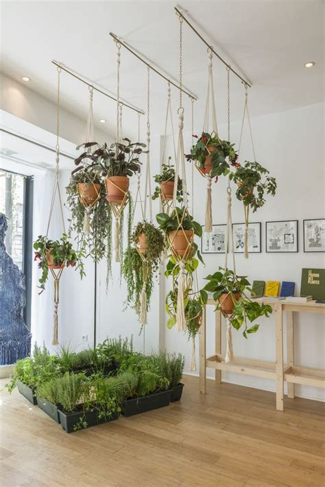 hanging a plant from the ceiling blog avie