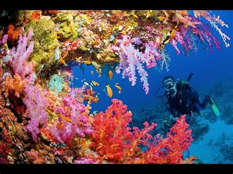 into the blue underwater sounds of nature for relaxation vote no on underwater footage