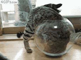 why cats are liquids the meta picture why cats are liquids the meta picture