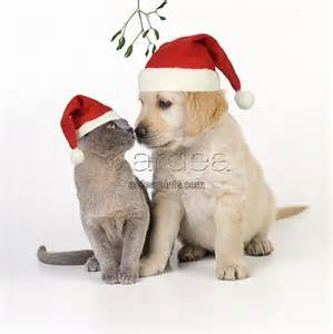 Home christmas puppies and kittens wallpaper christmas kitten puppy