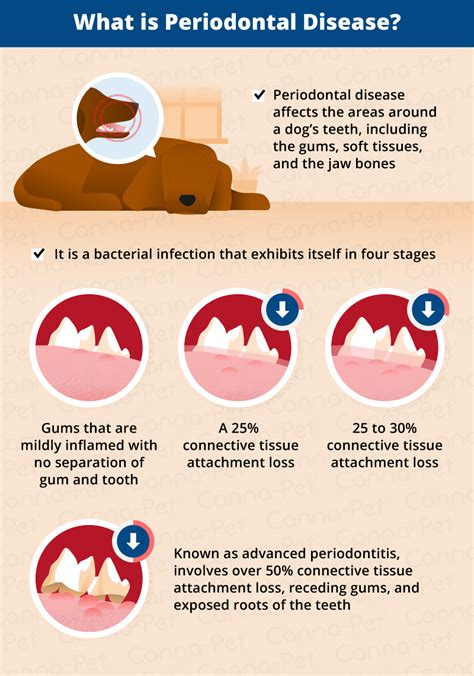 gum disease in dogs periodontal disease in senior dogs canna pet 174