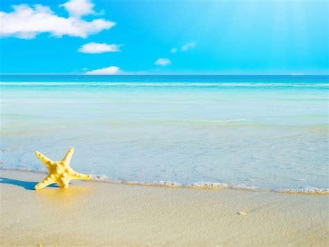 gambar wallpaper bintang laut gambar pemandangan pantai dengan bintang laut kitchens