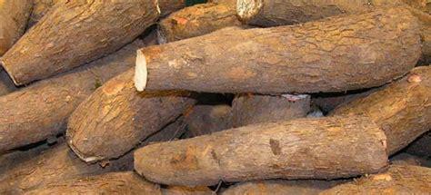 kebutuhan gizi  manula berbasis bahan hayati lokal