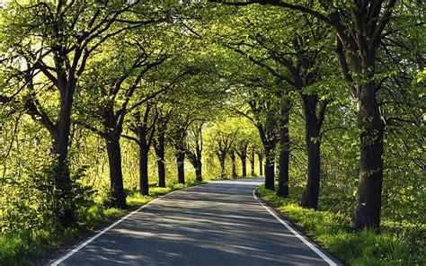 wallpaper alley road asphalt tree desktop wallpaper