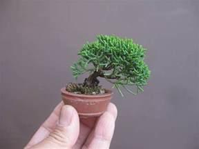 Miniature Plants For Sale mame bonsai bonsai empire