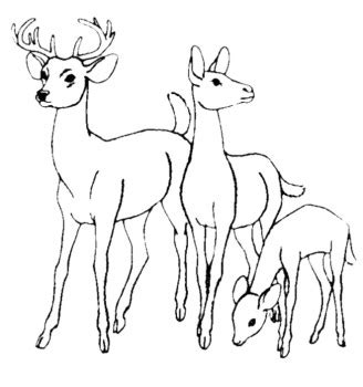 deer family coloring page family deer coloring pages kids coloring pages