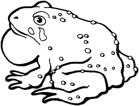 coloring pages frogs and toads free printable toad coloring pages for kids