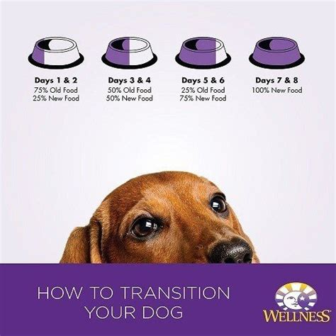 best puppy food for beagles best food for beagles 3 quality recommendations for 2017