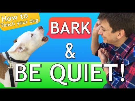 how to your to stop barking on command cutest puppy teaching the out command funnydog tv