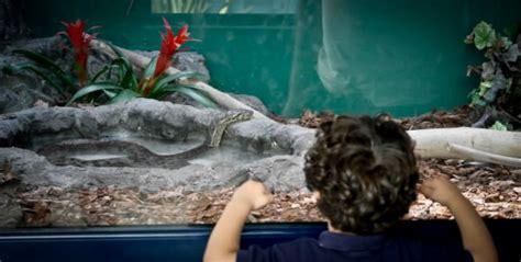 giardino zoologico napoli giardino zoologico riapre il rettilario 1 di 17