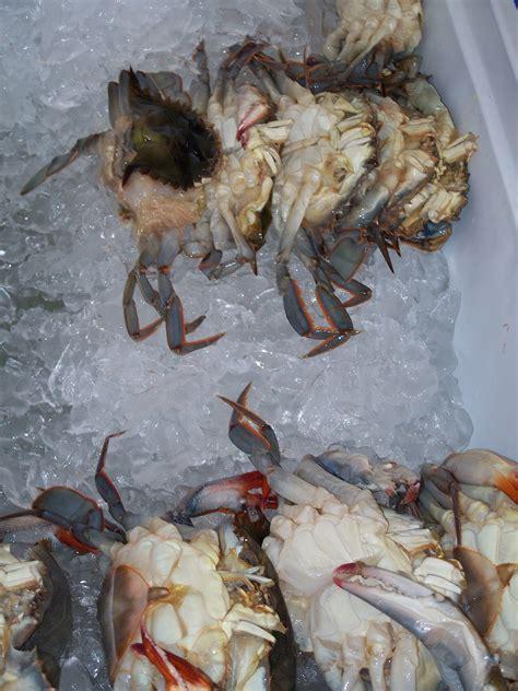 soft shell crab wikipedia