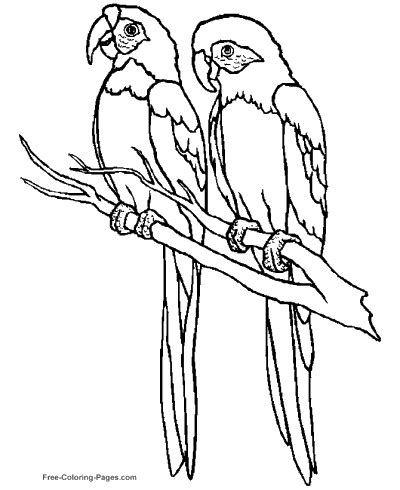 birdman coloring pages coloring pages of birds
