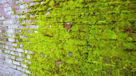 classic academy brick in the sun shade and moss