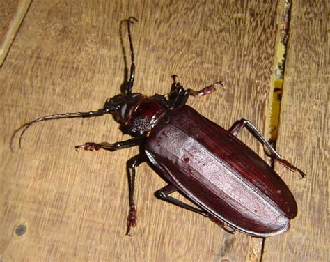 fun beetles facts  kids