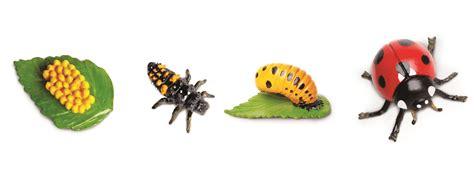 cycle of a education essentials safari ltd cycle of a ladybug