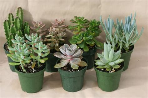 small plants to grow indoors 25 best ideas about indoor succulents on pinterest