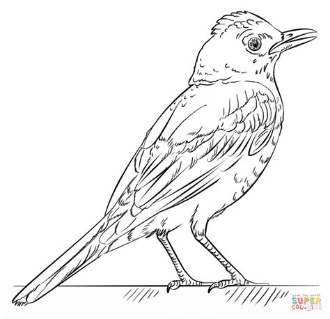 robin printable coloring page red robin coloring page free printable coloring pages