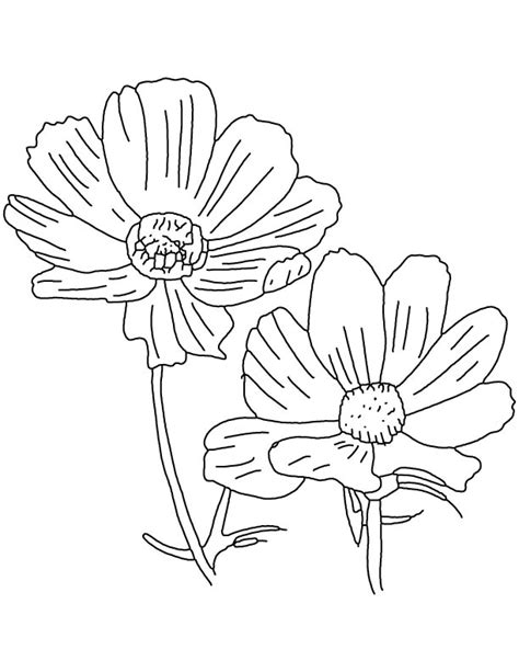 cosmos flower coloring page free coloring pages of cosmos flower