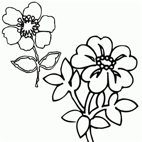 Wildflower Coloring Book