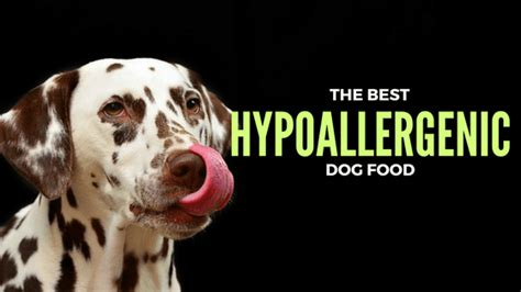 best food for skin allergies 2017 best food for skin allergies stick to hypoallergenic brands