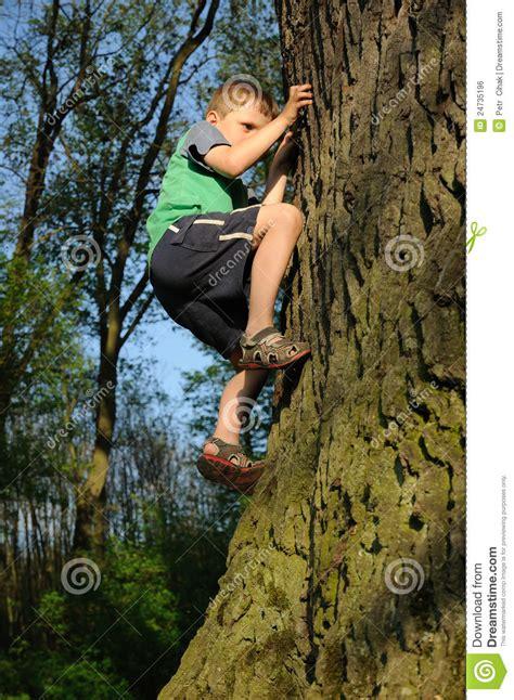 boys tree boy climbing tree royalty free stock image image