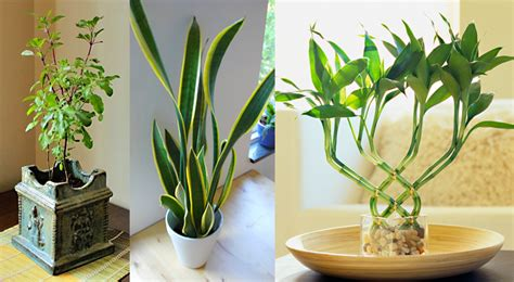 good inside plants plantas para ter dentro de casa flores cultura mix