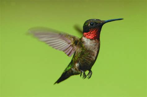 cullen the joys of watching hummingbirds toronto star