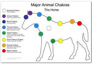animal people reiki  dubai