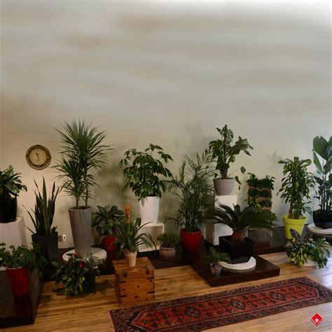 le pour plante 0 salon vert plantes