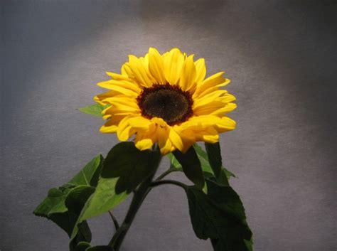 dizionario dei fiori il dizionario dei fiori il giardino incantato