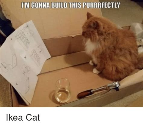 Ikea Furniture Meme - 25 best memes about ikea cat ikea cat memes