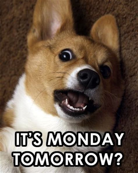 Its Monday Tomorrow Meme - 377 best sunday thru saturday images on pinterest