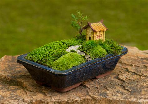 Moss And Gardens by Bonsai Moss And Gardens