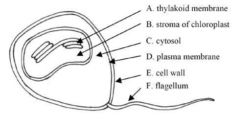 protein lipid ratio erythrocyte membrane international biology olympiad questions biology exams 4 u