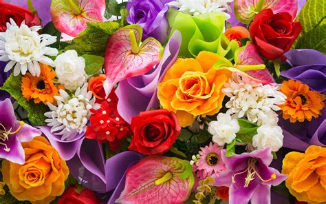 wallpaper flower colourful colorful flowers wallpaper 7694 2560 x 1600