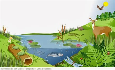 exle of ecosystem grade 9 science nov 22 introduction to ecology