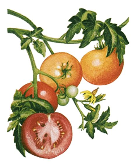 Sadly Tomatoes Are Not In Season Right Now by You Say Tomato I Say Toh Omg Gimme One