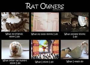 Rat Meme - world rat day 2013 sunshine scrapbook