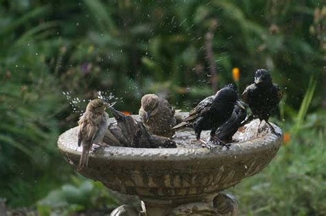 bird baths british bird lovers