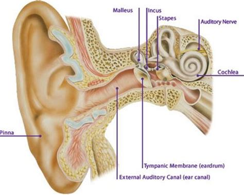 complications of ears diabetes total