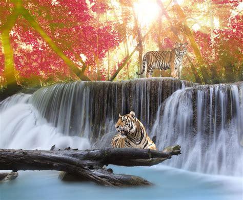 imagenes de paisajes salvajes banco de im 225 genes para ver disfrutar y compartir d 237 a