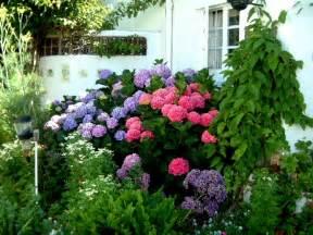 garten tipps garten tipps hortensien aequivalere