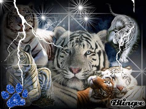 imagenes google tigres fotos grandes gifs tigres pesquisa google felinos