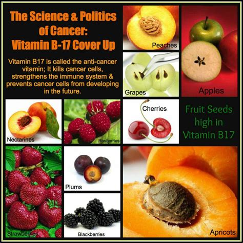 Vitamin B17 Consciousness Energy Path 111 Cancer Conspiracy Vitamin